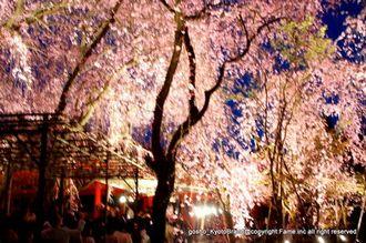 平安神宮の夜桜