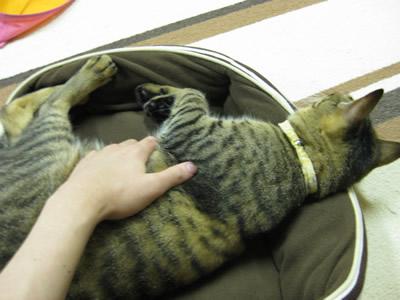 猫カフェ03