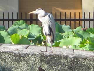 嵐山の鳥2