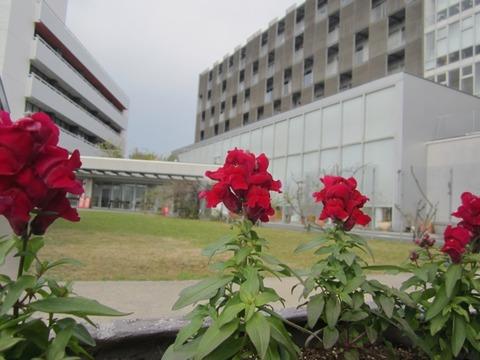 ブログ 病院の花