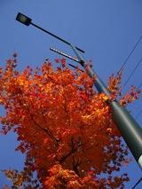 占冠街路樹