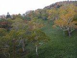 オコタンペこ紅葉