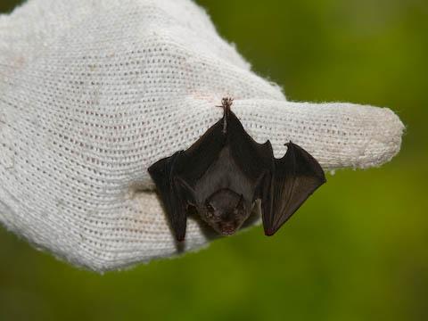コウモリの画像 p1_37