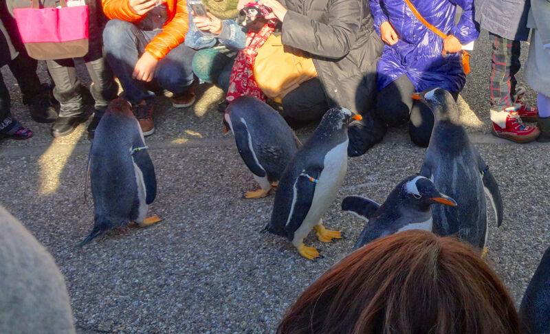 名古屋港水族館ペンギンよちよちウォーク 2013年12月 No - 33