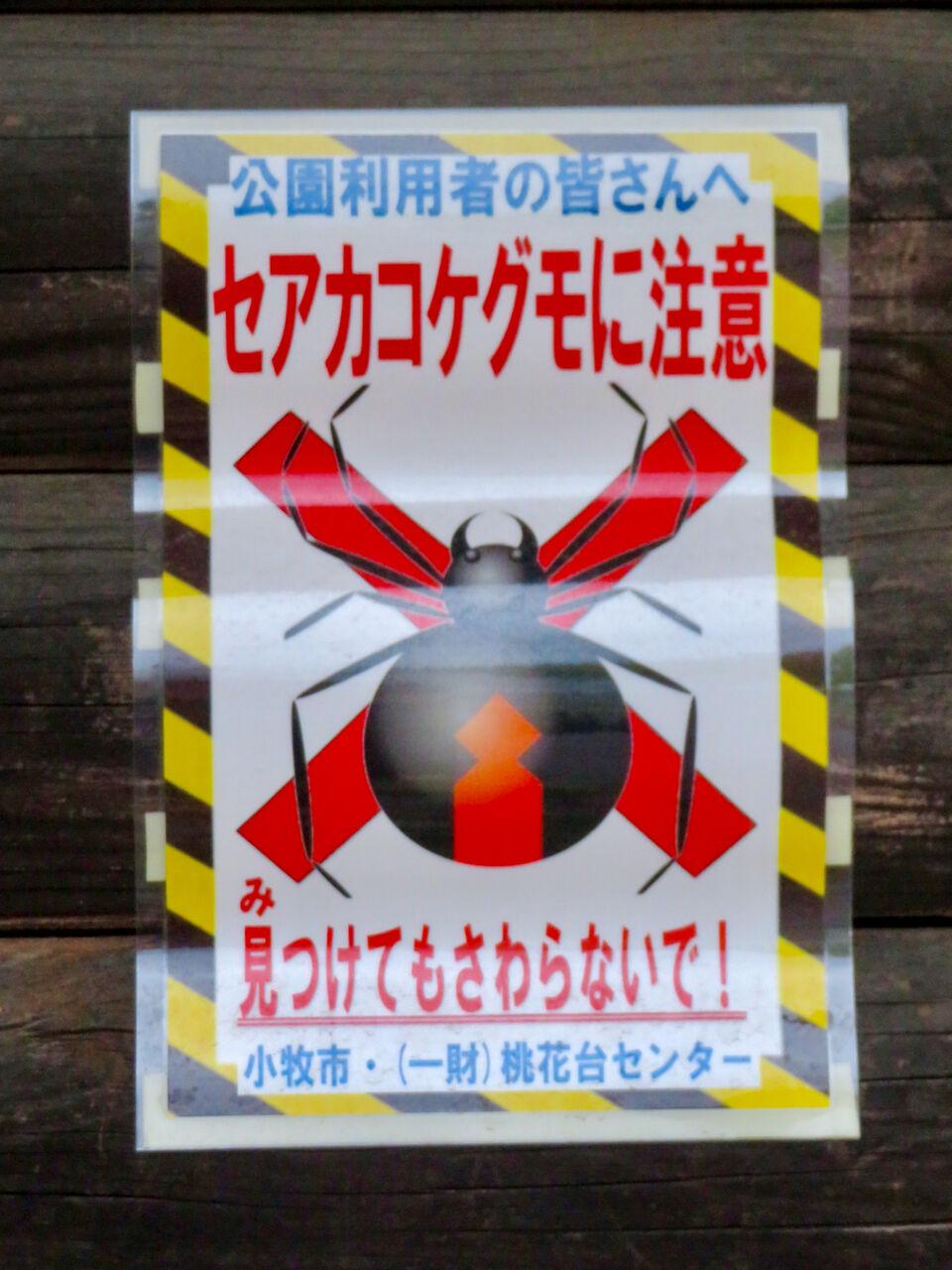 桃花台中央公園に「セアカゴケグモ注意」の張り紙!?