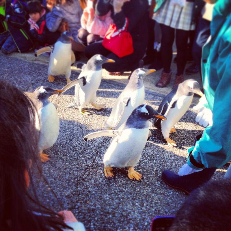 名古屋港水族館「ペンギンよちよちウォーク」を見に行ってきましたぁ〜!(追記あり)