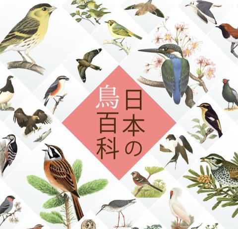 鳥の名前を調べるのにサントリーの「日本の鳥百科」がお薦め!