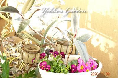 yokkosan's-Garden1
