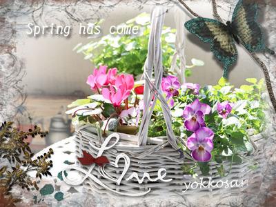 yokkosanのベランダの花