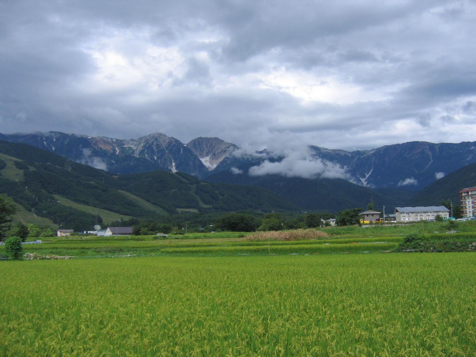 白馬村の自然3 小江戸 徒然草:長野 白馬村(中部山岳国立公園) - l