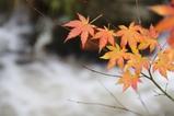 乳頭温泉紅葉