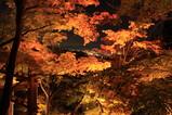 清水寺夜景1