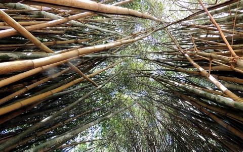 bamboos-370158_960_720