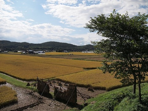 yamadas-rice-fields-978738_640