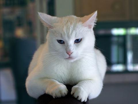 cat-996190_640