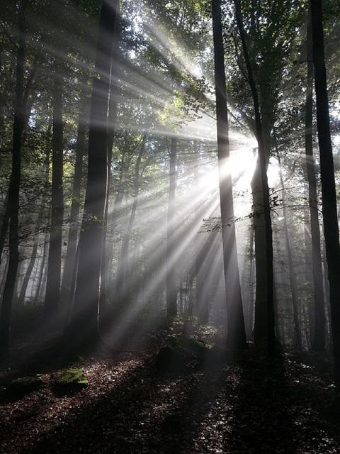 sunbeam-540589_960_720