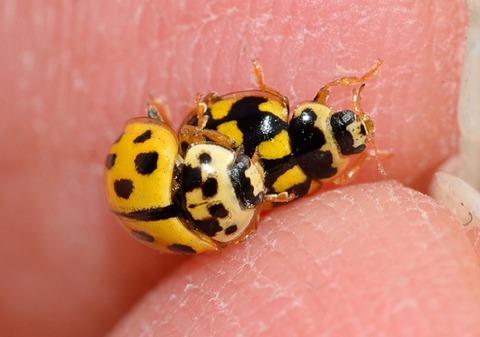 ladybug-756818_960_720