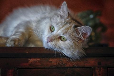 cat-1136084_960_720