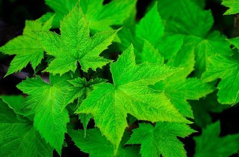 green-872866_640