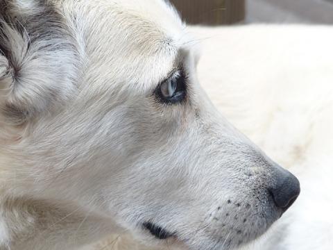 dog-186222_960_720