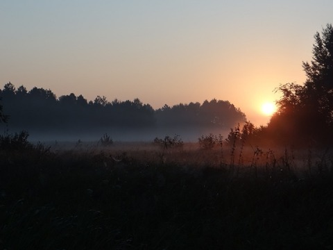 the-fog-232400_960_720