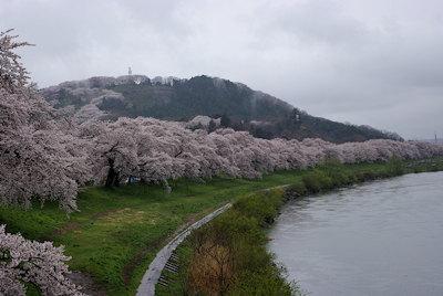 一目千本桜雨1