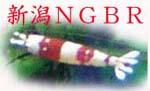 新潟NGBR