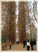冬ソナの並木道
