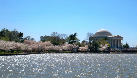 Tidal_Basin_blossoms_by_Matthew_Bisanz