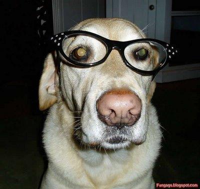 メガネ犬15