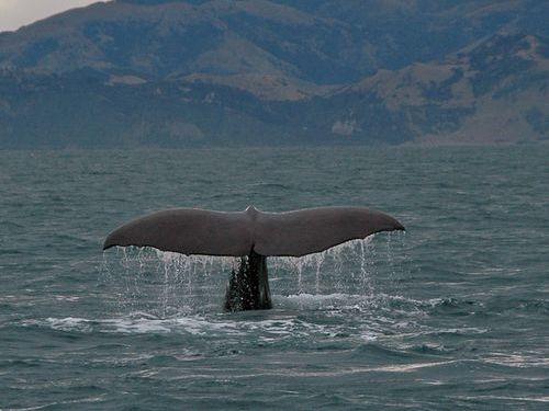 クジラの大きさ00
