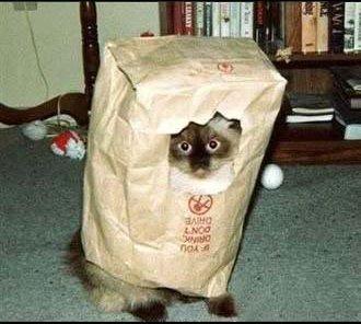 猫人間05