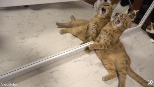 猫10匹と大きな鏡01
