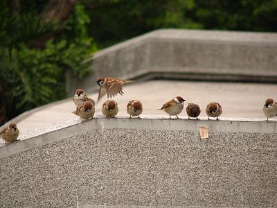 スズメの集まり