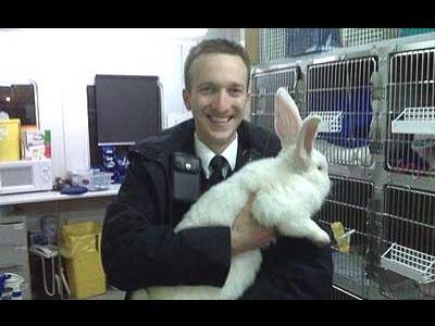 警察とウサギ