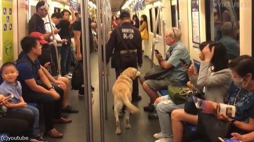 麻薬犬が地下鉄でリラックス01