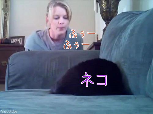 お姉さん「背中をフー」猫「誰?」00