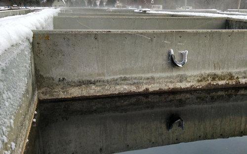 寒さで魚が凍った01