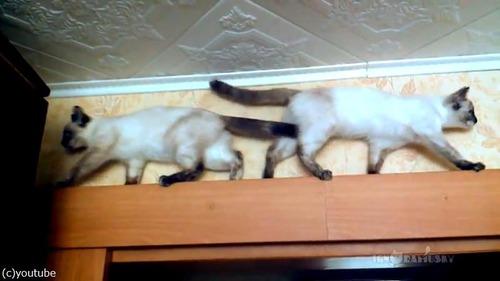 猫が正面衝突するかと思いきや04