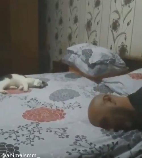 「遊んでニャ—」子猫の可愛すぎるアピール04