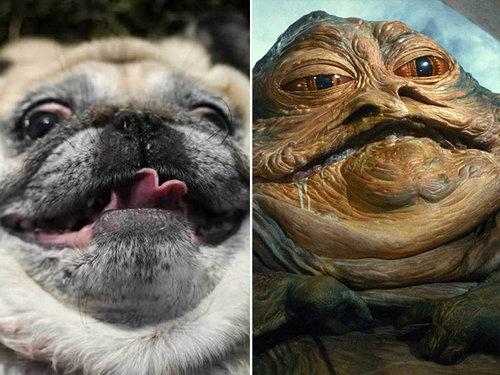 何かに似てる犬たち07