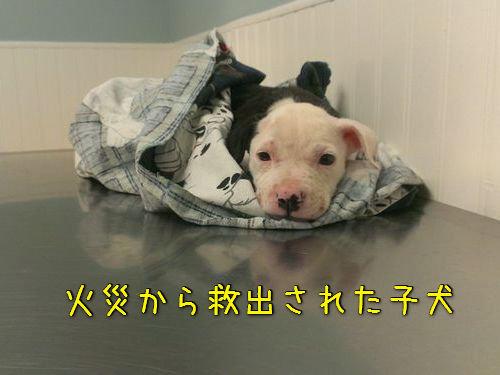 火災から救出された子犬、消防士に00