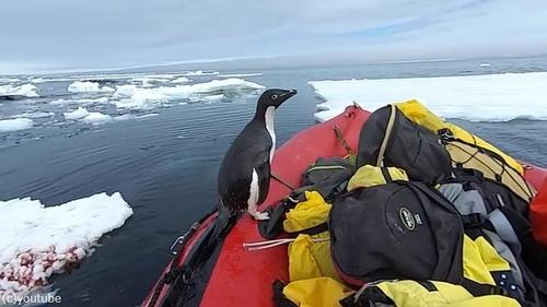 ペンギン「間違えました」03