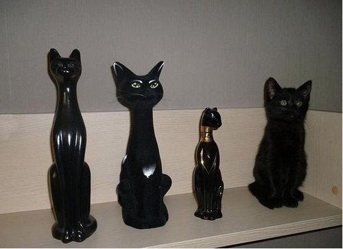 13かくれんぼする猫たち