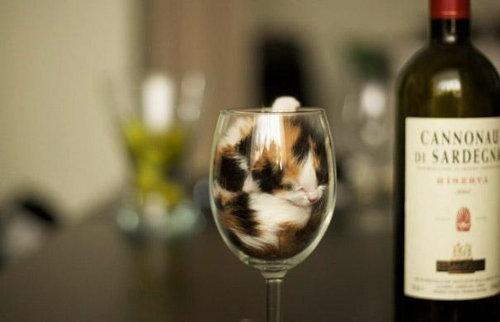 猫は液体説12