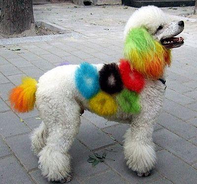 カラフルに染められた犬09