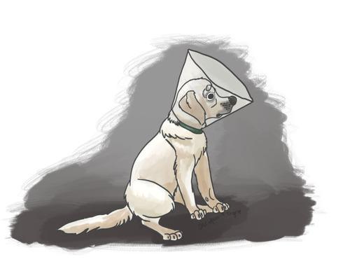 壁を見つめる犬