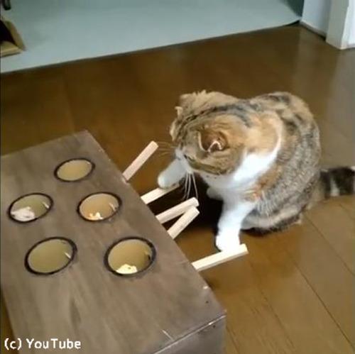 モグラたたきで遊ぶ猫01