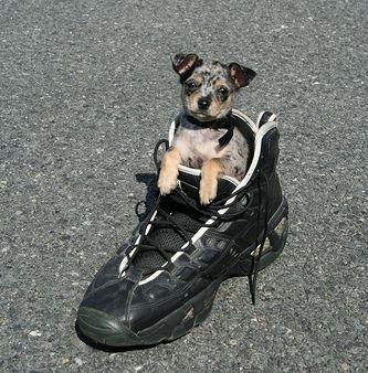 靴の中の犬20