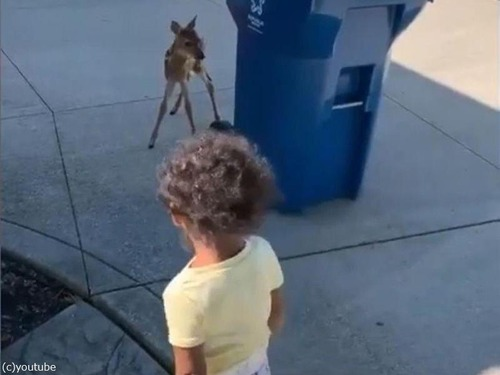 鹿の赤ちゃんが人間の赤ちゃんと出会った03